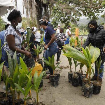 Gobierno entrega 1000 plantas de coco a garínagu en Corozal
